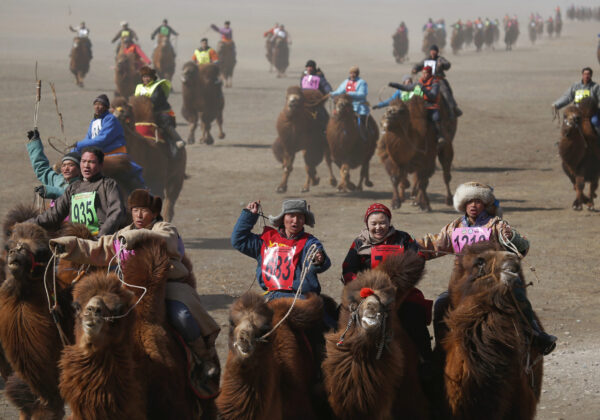 """Contestants ride during a camel race at """"Temeenii bayar"""", the Camel Festival, in Dalanzadgad, Umnugobi aimag, Mongolia, March 7, 2016. On the steppes of the Gobi Desert, the crowd urges on Bactrian camels laden down with all that's needed to build and live in a traditional Mongolian tent. Guinness World Records classes the 15 km race that's part of the two-day festival as the largest camel race in the world, drawing 1,108 participants. The winning camel romped home in 35 minutes and 12 seconds, according to the records website.  REUTERS/B. Rentsendorj SEARCH """"TEMEENII BAYAR"""" FOR THIS STORY.   SEARCH """"THE WIDER IMAGE"""" FOR ALL STORIES - D1BESVHVDMAE"""